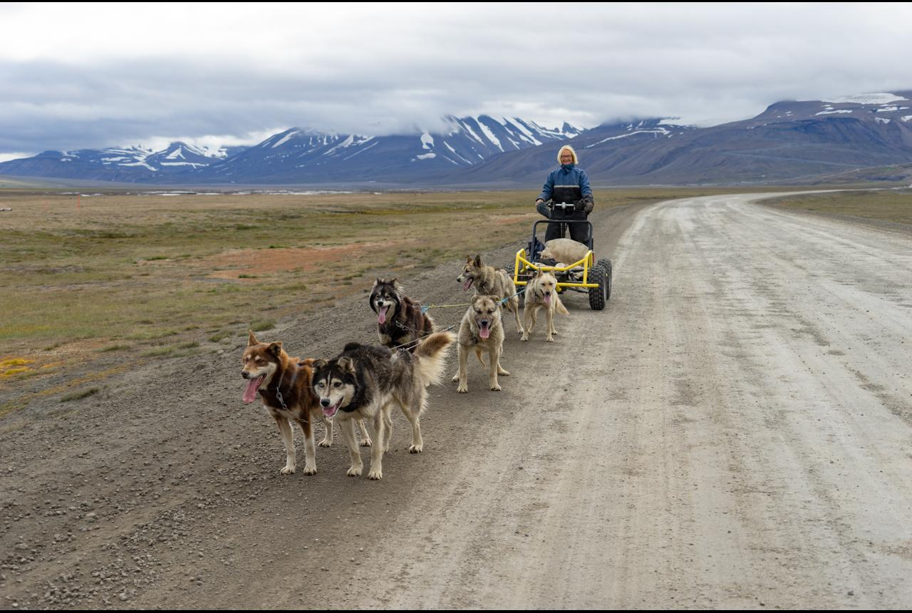 On sled pulled by Alaskan husky dogs